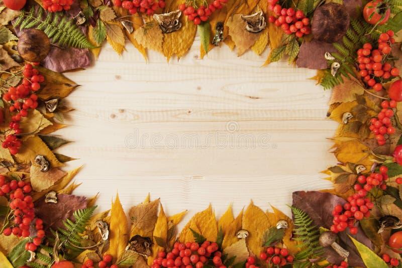 Πλαίσιο από τα ξηρά ζωηρόχρωμα φύλλα φθινοπώρου, τα ξηρά και φρέσκα μανιτάρια, τα φρέσκα ροδαλά ισχία και rowanberry στο ξύλινο υ στοκ φωτογραφία με δικαίωμα ελεύθερης χρήσης