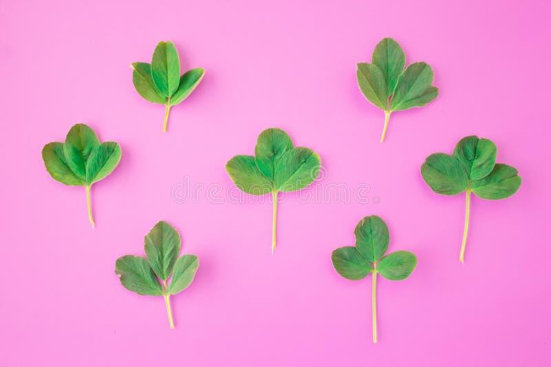 Δημιουργικό σχεδιάγραμμα Πλαίσιο από τους πράσινους κλάδους, φύλλα σε ένα ρόδινο υπόβαθρο Η ελάχιστη έννοια, επίπεδη βάζει, τοπ ά στοκ φωτογραφία