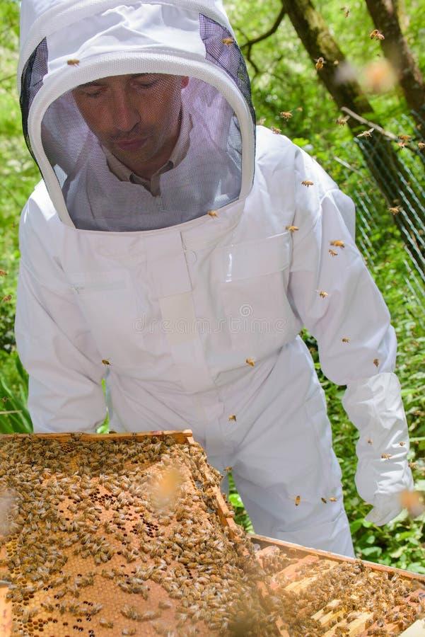 Πλαίσιο εκμετάλλευσης μελισσοκόμων που καλύπτεται στις μέλισσες στοκ εικόνα με δικαίωμα ελεύθερης χρήσης