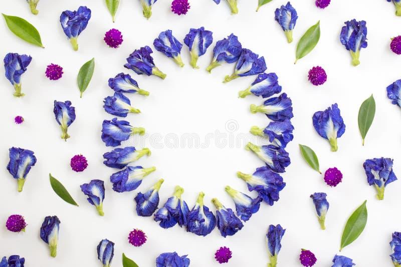Πλαίσιο κύκλων των μπλε λουλουδιών αμάραντων μπιζελιών και σφαιρών στοκ φωτογραφίες