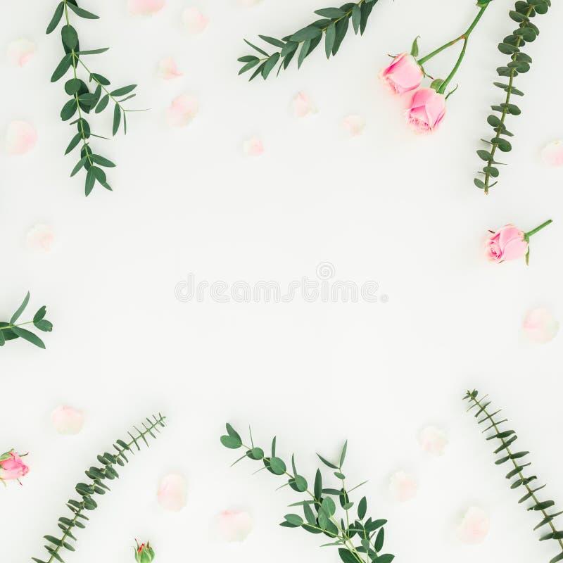 Πλαίσιο λουλουδιών των ρόδινων τριαντάφυλλων και των κλάδων ευκαλύπτων στο άσπρο υπόβαθρο Επίπεδος βάλτε, τοπ άποψη διανυσματική απεικόνιση