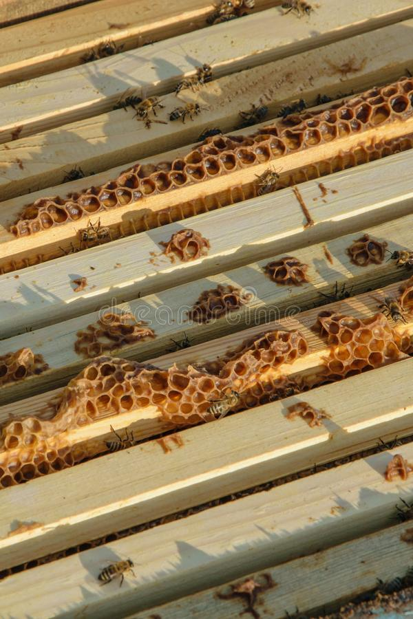 Πλαίσιο μιας κυψέλης Μέλισσες εργασίας στις κηρήθρες που γεμίζουν με το μέλι στοκ εικόνα