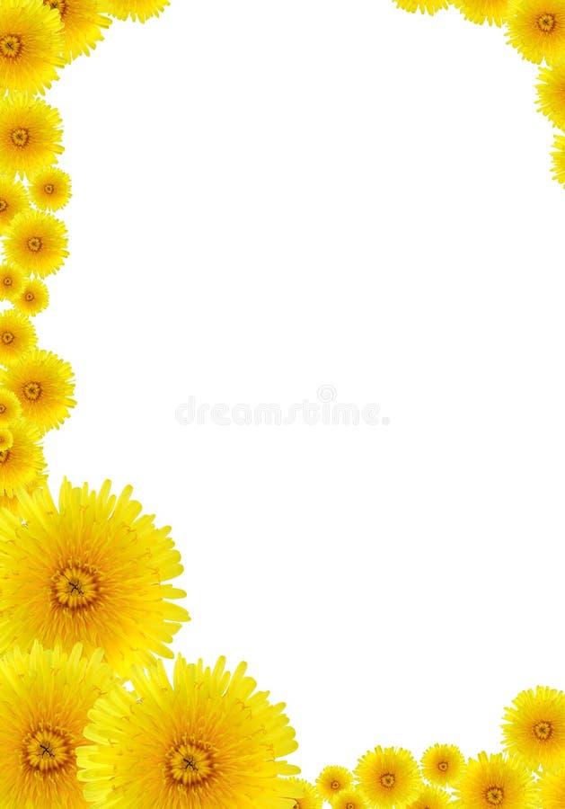 πλαίσιο πικραλίδων κίτριν&o στοκ εικόνα με δικαίωμα ελεύθερης χρήσης