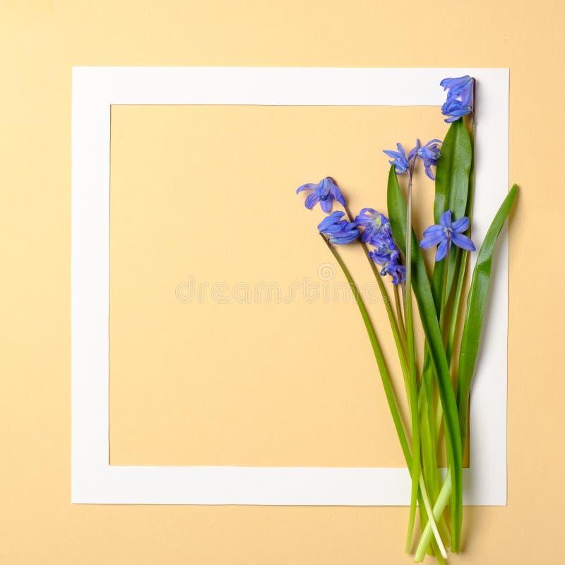 Η άνοιξη ανθίζει την έννοια Πλαίσιο συνόρων και τρυφερά λουλούδια με τα μπλε πέταλα στο κίτρινο υπόβαθρο κρητιδογραφιών Έμβλημα ε στοκ φωτογραφία