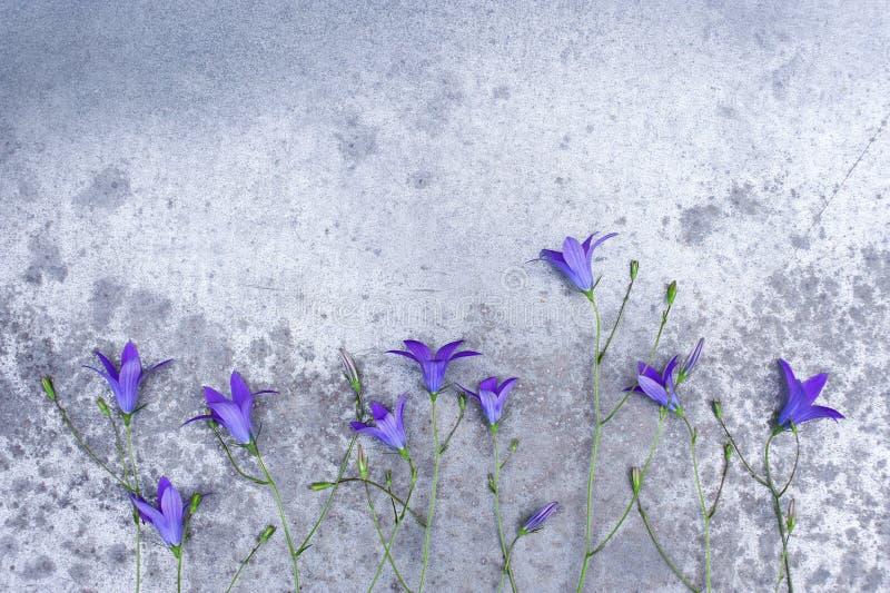 Πλαίσιο των μικρών bluebells στον κατασκευασμένο γκρίζο πίνακα στοκ εικόνα με δικαίωμα ελεύθερης χρήσης