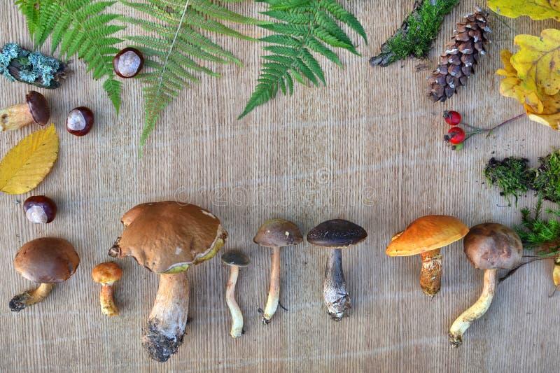 Πλαίσιο φύσης των εδώδιμων δασικών μανιταριών, των φύλλων και των κώνων στοκ εικόνες με δικαίωμα ελεύθερης χρήσης