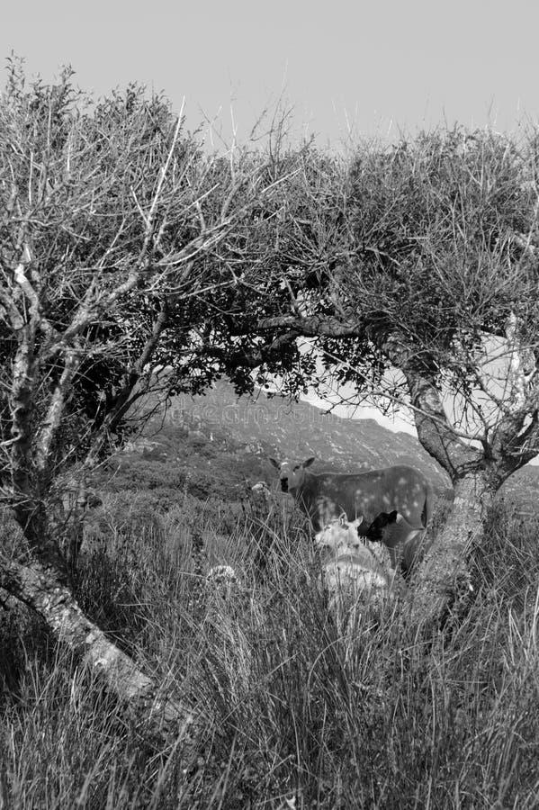 πλαισιωμένα αψίδα δέντρα πρ& στοκ φωτογραφίες