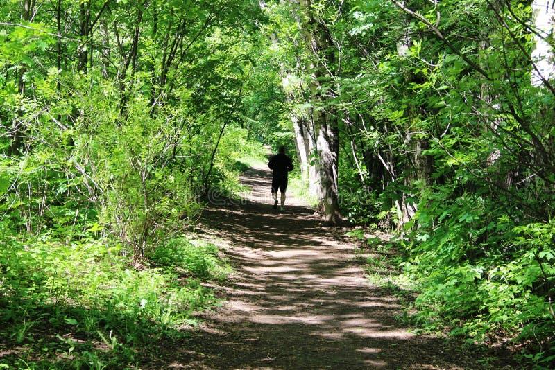 Πλαισιωμένος από το πράσινο φύλλωμα των δέντρων και των θάμνων, τη δασική πορεία στο πάρκο και τη σκιαγραφία ενός τρέχοντας ατόμο στοκ φωτογραφία