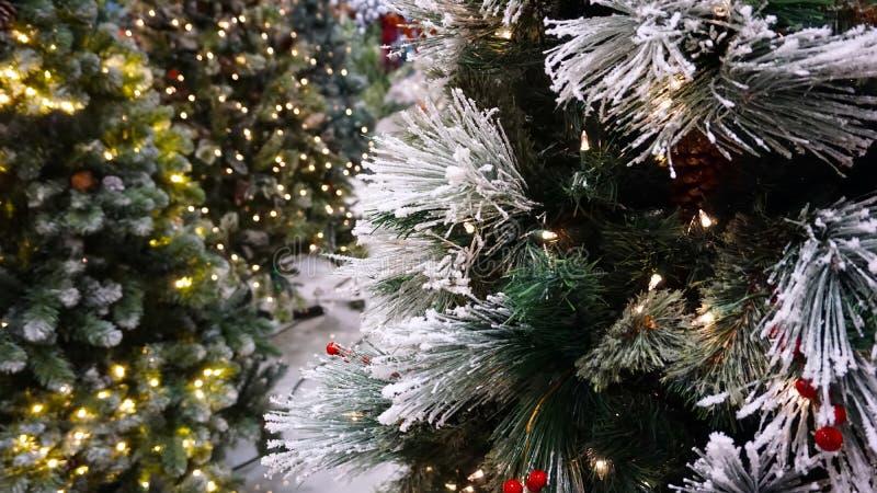Πλαστικά φύλλα χριστουγεννιάτικων δέντρων στοκ εικόνες