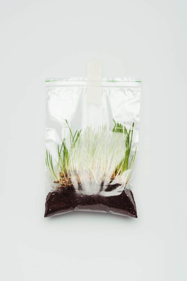 πλαστική τσάντα με το σπορόφυτο και την εδαφολογική ένωση απεικόνιση αποθεμάτων