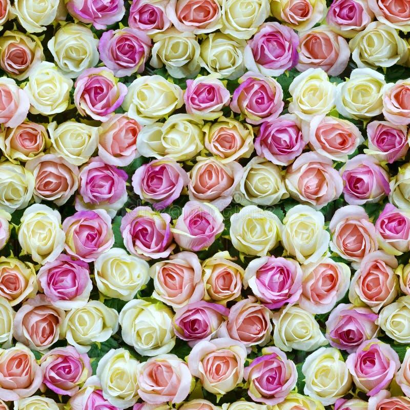 Πλαστό άσπρο και ρόδινο άνευ ραφής υπόβαθρο τοπ άποψης τριαντάφυλλων στοκ φωτογραφίες με δικαίωμα ελεύθερης χρήσης