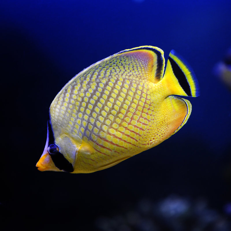 πλεγμένη πεταλούδα λοταρία s κίτρινη στοκ φωτογραφία