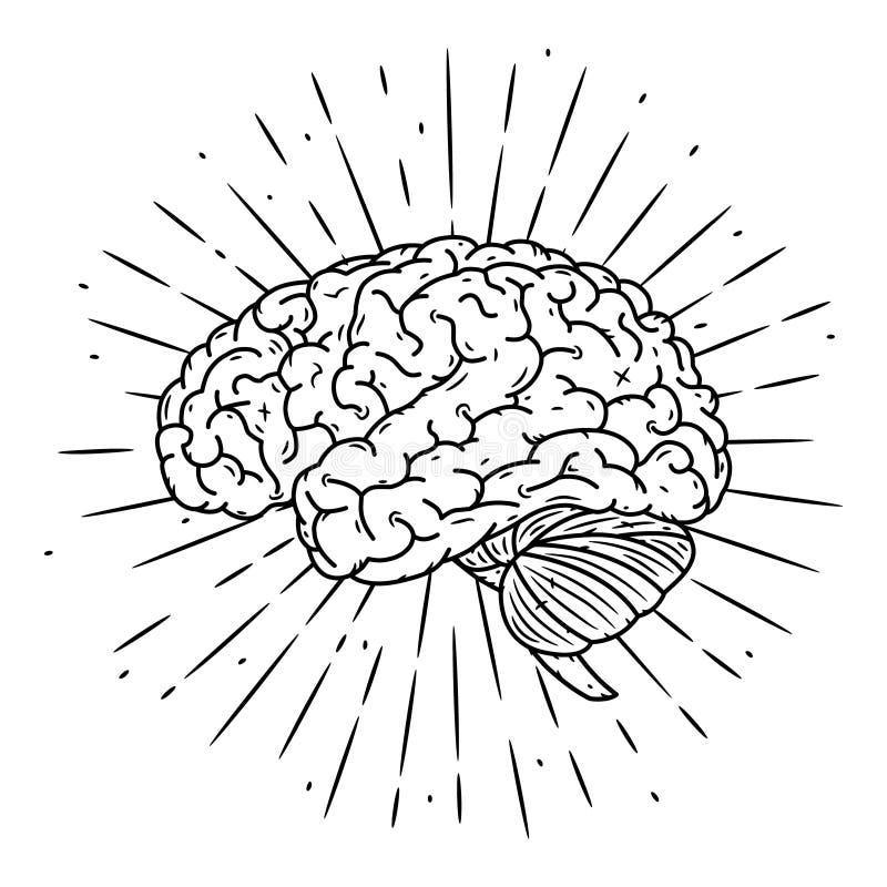 πλεγμένο Συρμένη χέρι διανυσματική απεικόνιση με τον εγκέφαλο και τις διάφορες ακτίνες Χρησιμοποιημένος για την αφίσα, έμβλημα, Ι απεικόνιση αποθεμάτων