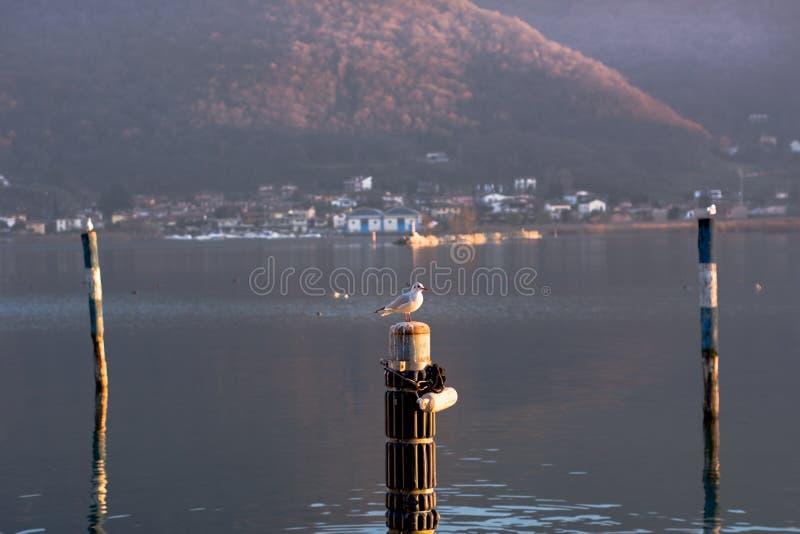 Πλευρά λιμνών σε Iseo στοκ εικόνες