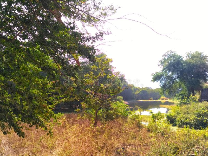 Πλευρά λιμνών στοκ φωτογραφίες με δικαίωμα ελεύθερης χρήσης