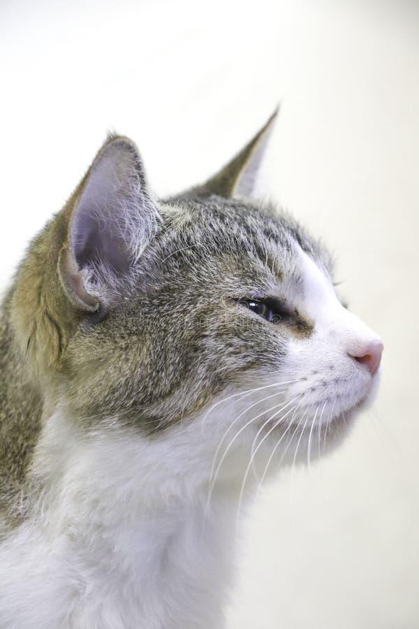 Πλευρά που πυροβολείται ενός τιγρέ γατακιού στοκ εικόνα με δικαίωμα ελεύθερης χρήσης