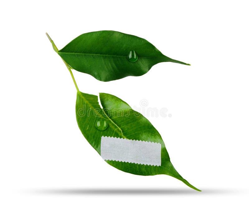 Πληγωμένο πράσινο φύλλο στοκ εικόνα