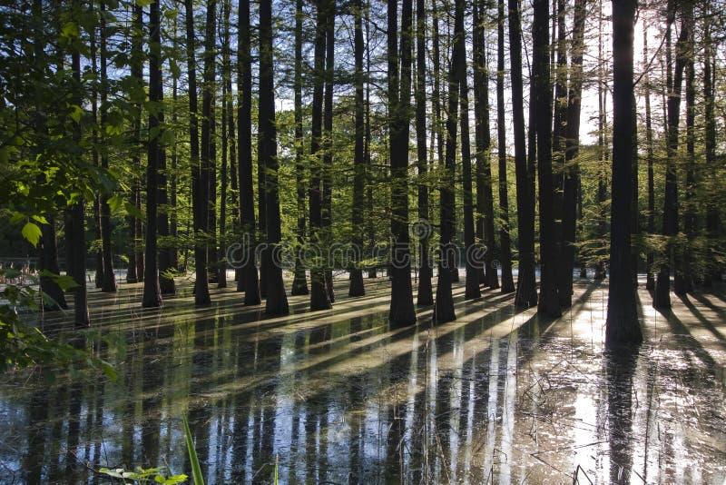 Πλημμυρισμένο δάσος στοκ εικόνα με δικαίωμα ελεύθερης χρήσης