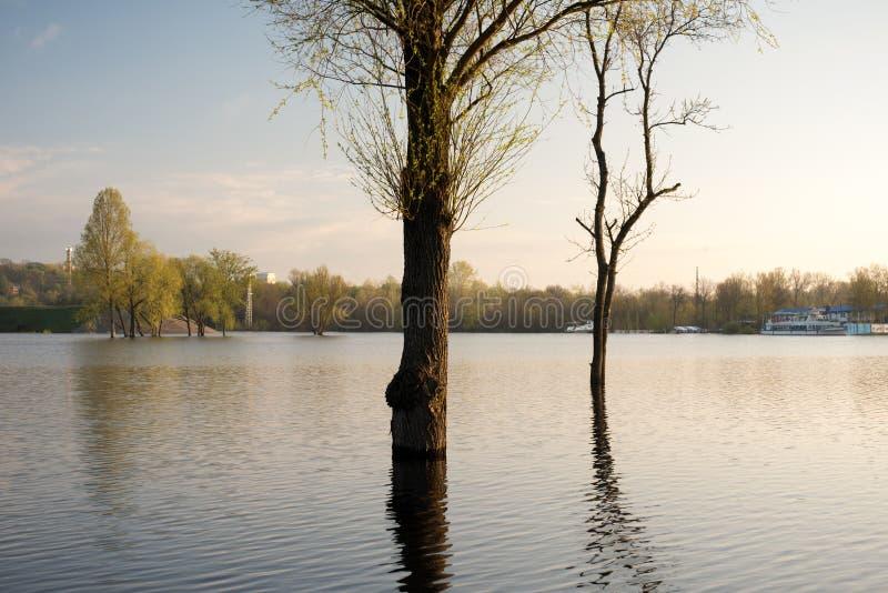 Πλημμύρα Δέντρα στο νερό στοκ φωτογραφία