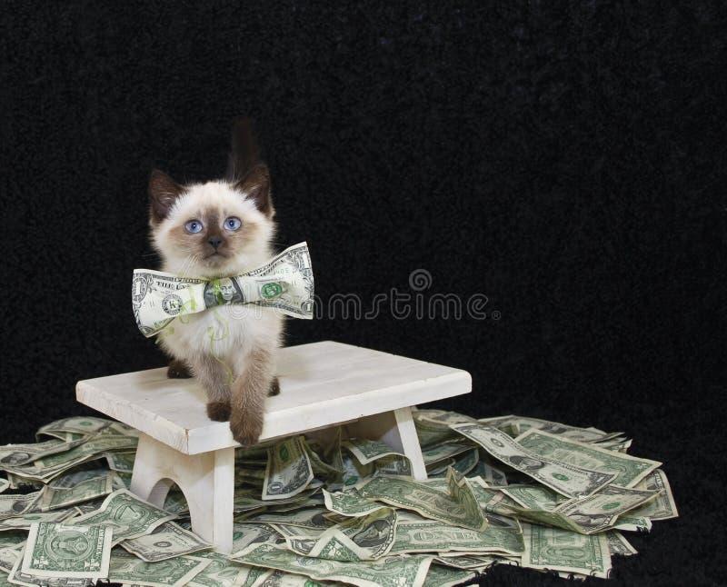 Πλούσιοι λίγο γατάκι στοκ φωτογραφίες με δικαίωμα ελεύθερης χρήσης