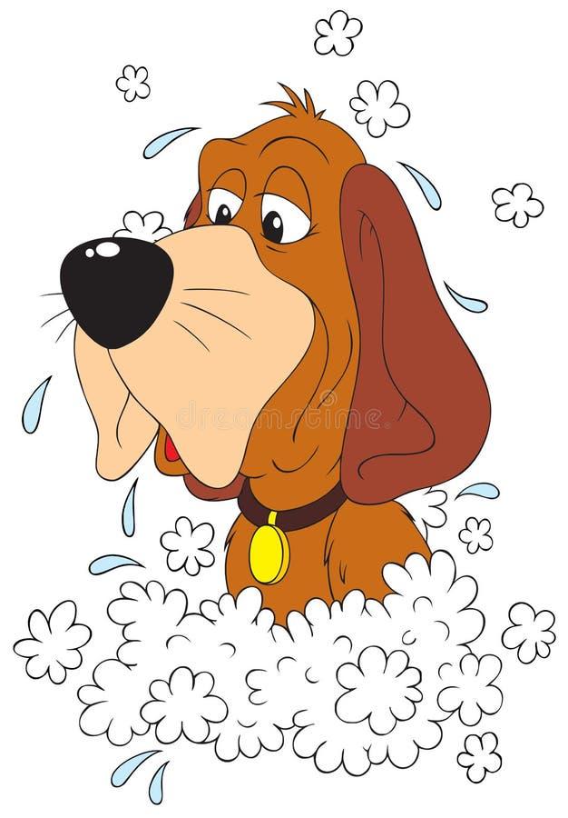 πλύση σκυλιών στοκ φωτογραφία