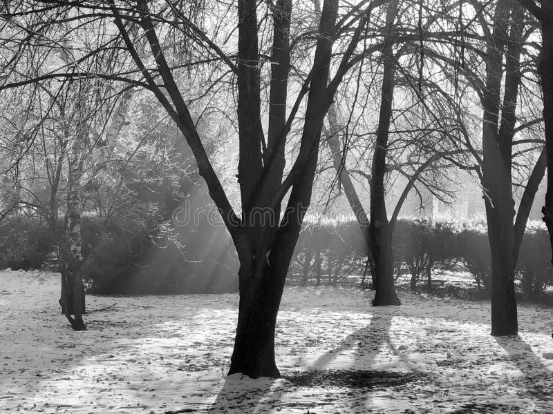 Πνευματικό δάσος στην ανατολή στοκ φωτογραφίες