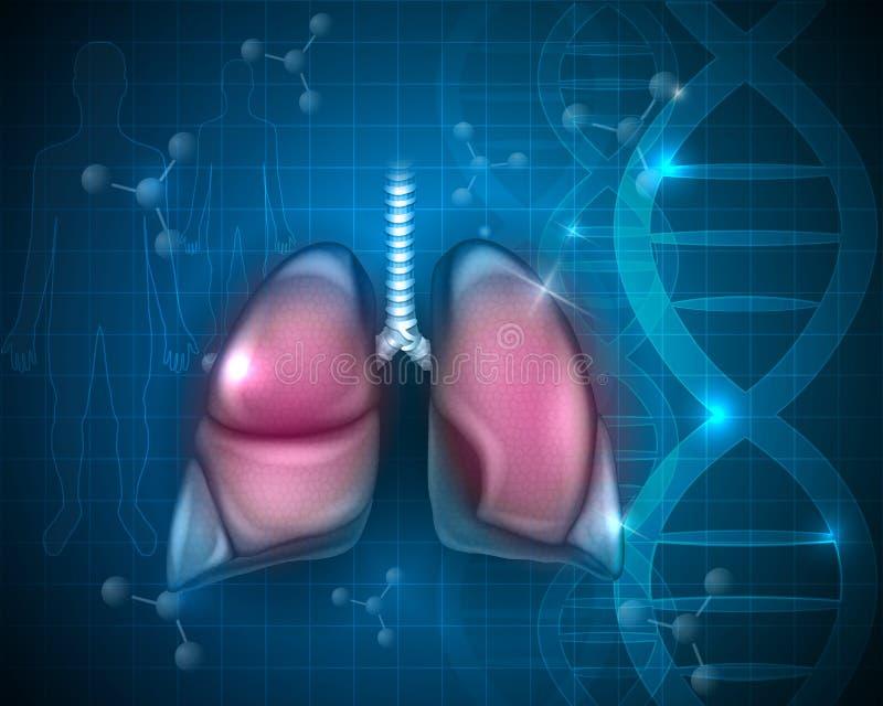 Πνεύμονες, αναπνευστικά όργανα απεικόνιση αποθεμάτων