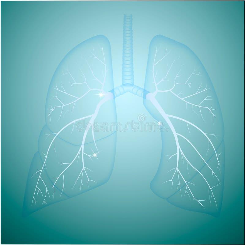 πνεύμονες στοκ φωτογραφία με δικαίωμα ελεύθερης χρήσης