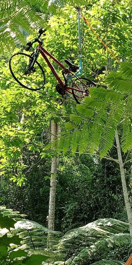 Ποδήλατα σε δέντρα στο πάρκο του Eco-tourist λασπωμένοι στοκ φωτογραφία