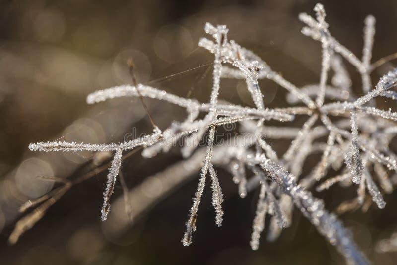 Ποιητικός χειμώνας στοκ φωτογραφία