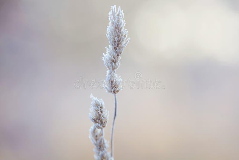 Ποιητικός χειμώνας στοκ φωτογραφίες
