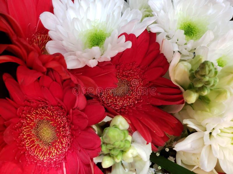 ποικιλία του λουλουδιού στα κόκκινα και άσπρα χρώματα σε μια floral ανθοδέσμη, ένα υπόβαθρο και μια σύσταση στοκ εικόνα