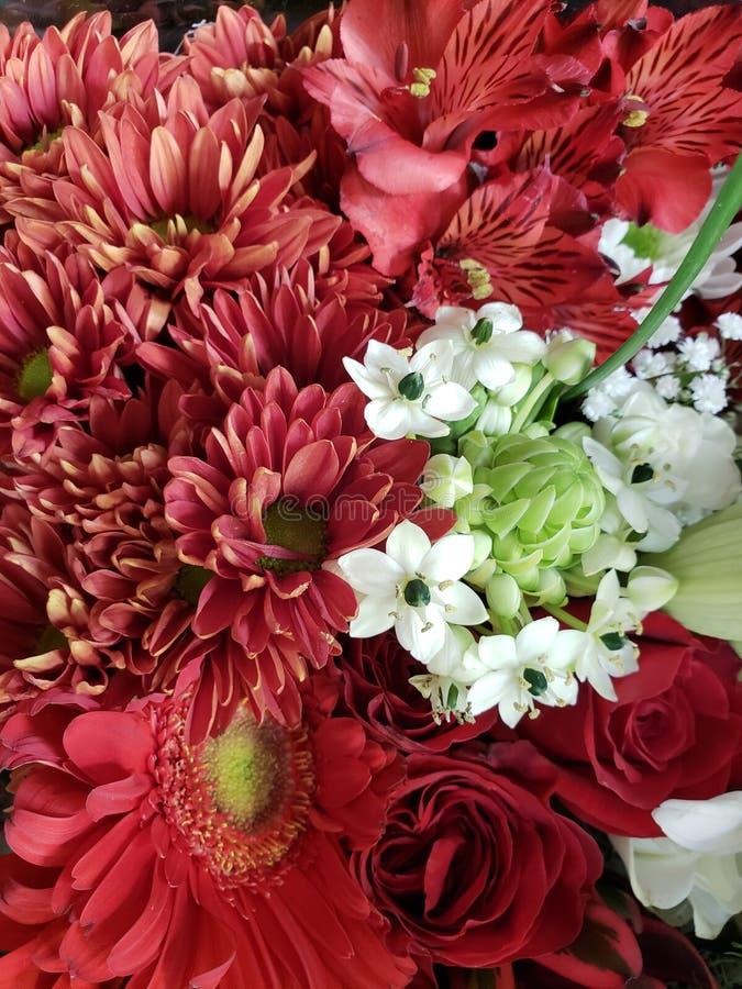 ποικιλία του λουλουδιού στα κόκκινα και άσπρα χρώματα σε μια floral ανθοδέσμη, ένα υπόβαθρο και μια σύσταση στοκ φωτογραφίες με δικαίωμα ελεύθερης χρήσης