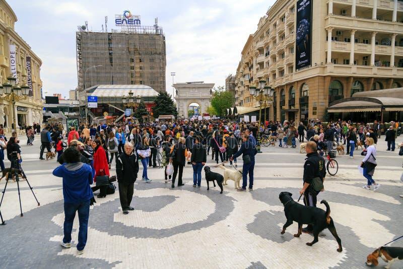 Πολίτες που διαμαρτύρονται τη βία προς τα σκυλιά οδών, στερεό στοκ εικόνα με δικαίωμα ελεύθερης χρήσης