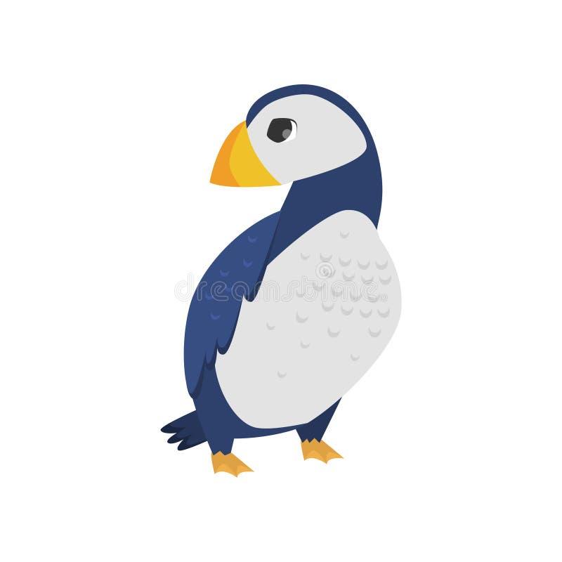 Πολικό ατλαντικό puffin πουλιών με το ζωηρόχρωμο ράμφος που απομονώνεται στο άσπρο υπόβαθρο ελεύθερη απεικόνιση δικαιώματος