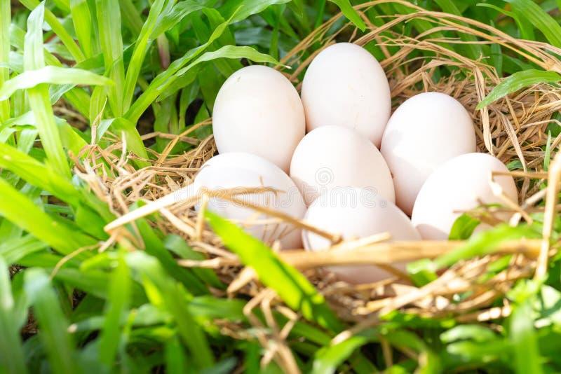 Πολλά αυγά παπιών στο σανό, πράσινο υπόβαθρο χλόης στοκ εικόνες