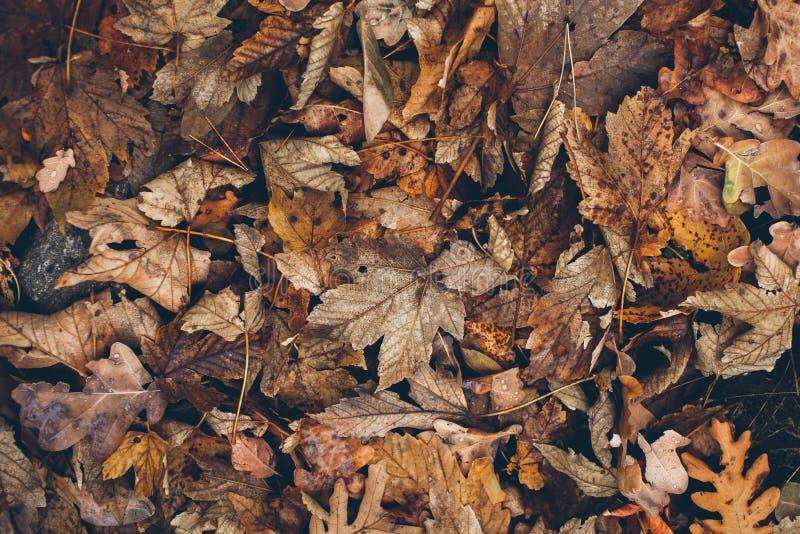 Πολλά διαφορετικά πεσμένα φύλλα στο δασικό πάτωμα ως υπόβαθρο Οργανικό υπόβαθρο που γίνεται με τα φθινοπωρινά πεσμένα φύλλα στοκ εικόνα