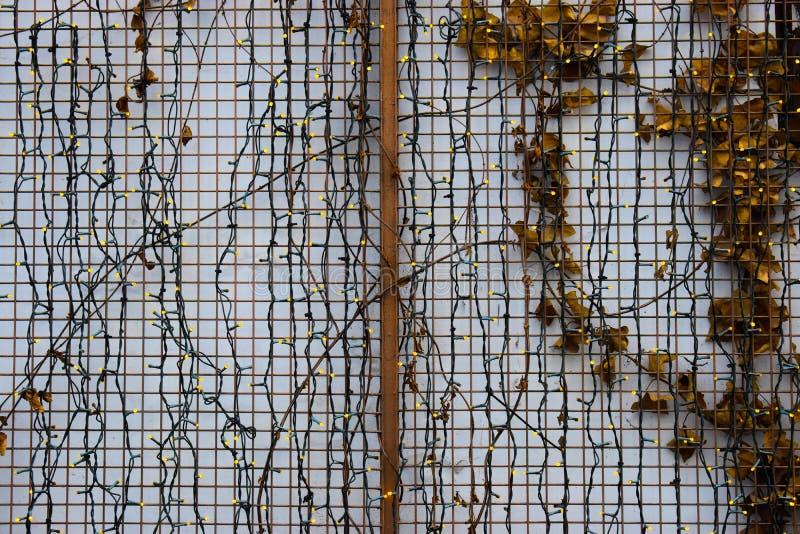 Πολλά μικρά οδηγημένα φω'τα στον άσπρο τοίχο με το σίδηρο περιφράζουν και φύλλα Μικρό οδηγημένο υπόβαθρο φω'των στοκ εικόνες