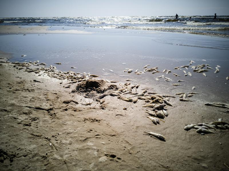 Πολλά νεκρά ψάρια στοκ φωτογραφία