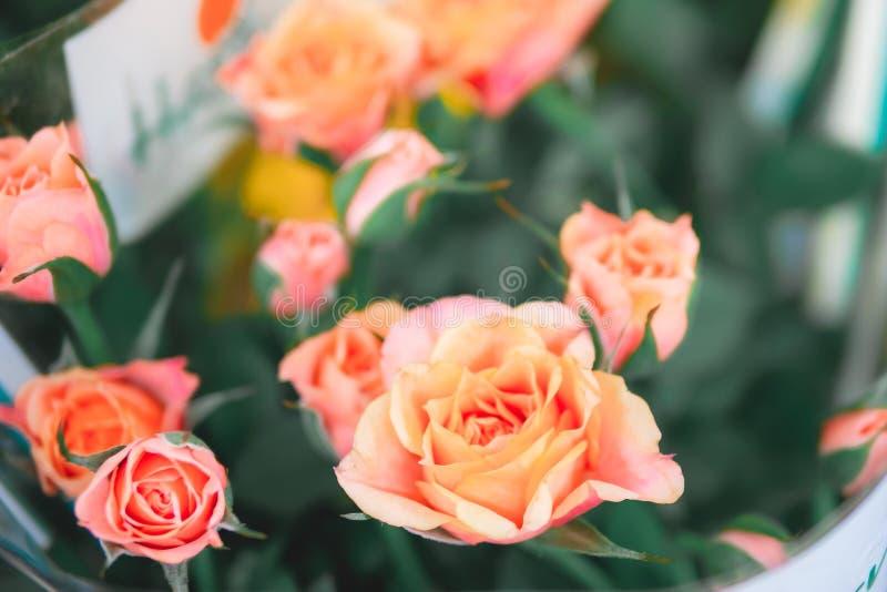 Πολλά πορτοκαλί τριαντάφυλλα κλείνουν, λεπτό λαδωτικό φόντο στοκ εικόνα με δικαίωμα ελεύθερης χρήσης