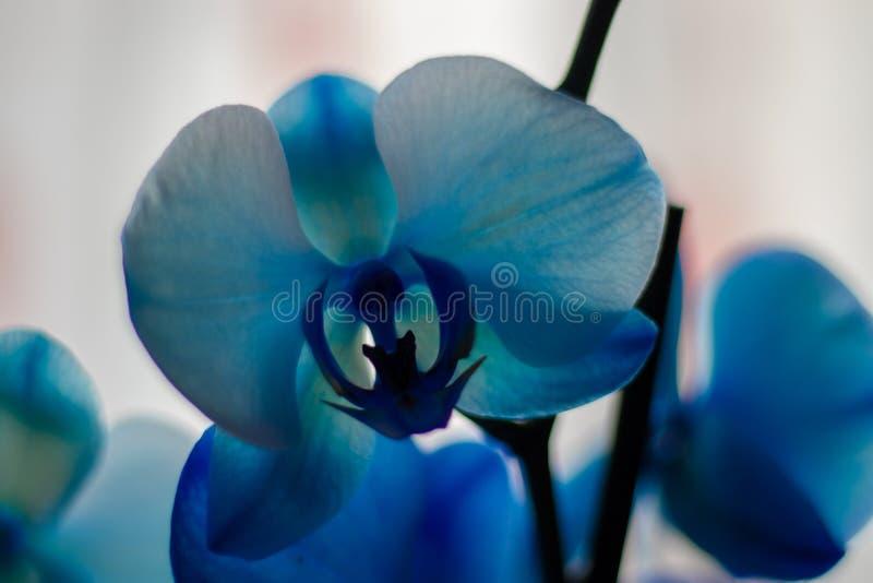 Πολλά χρώματα από ένα λουλούδι στοκ φωτογραφίες με δικαίωμα ελεύθερης χρήσης