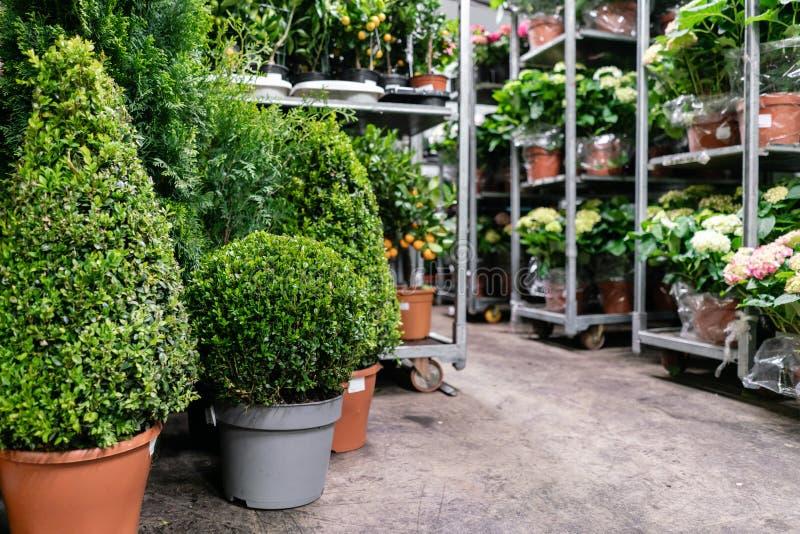 Πολλές διαφορετικές εγκαταστάσεις στα δοχεία λουλουδιών στο κατάστημα λουλουδιών Κέντρο κήπων και χονδρική έννοια προμηθευτών r στοκ εικόνες