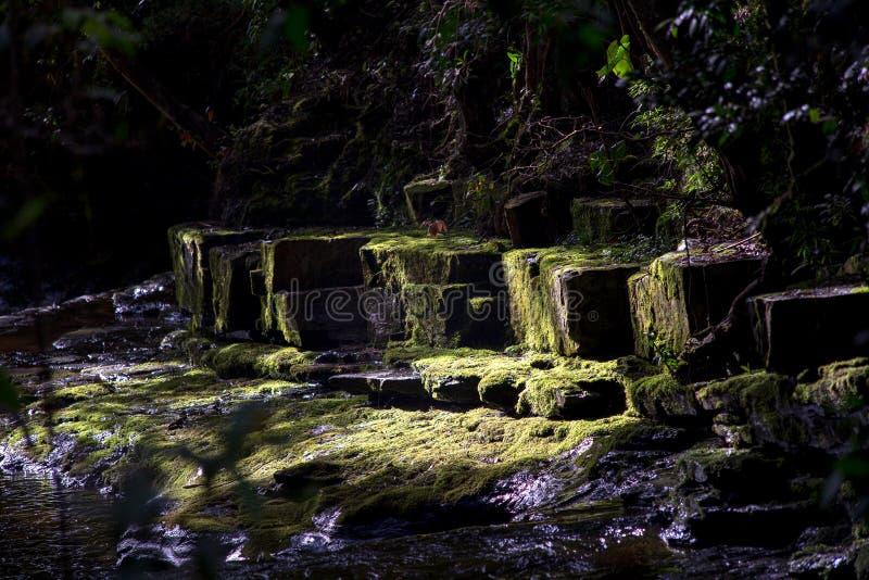 Πολλαπλάσια έκθεση του ρεύματος ενός ποταμού VII στοκ εικόνες με δικαίωμα ελεύθερης χρήσης