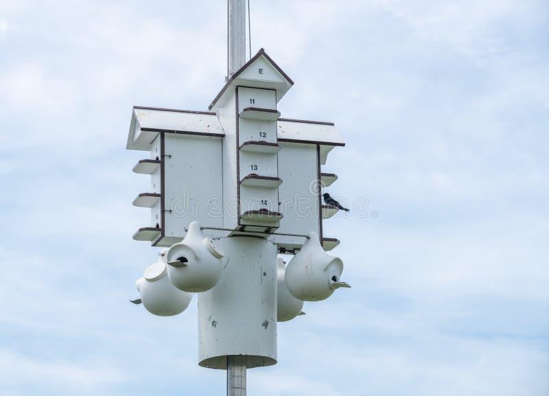 Πολλαπλάσιο σπίτι ή condo πουλιών κατοχής στο κρατικό πάρκο στοκ φωτογραφίες με δικαίωμα ελεύθερης χρήσης