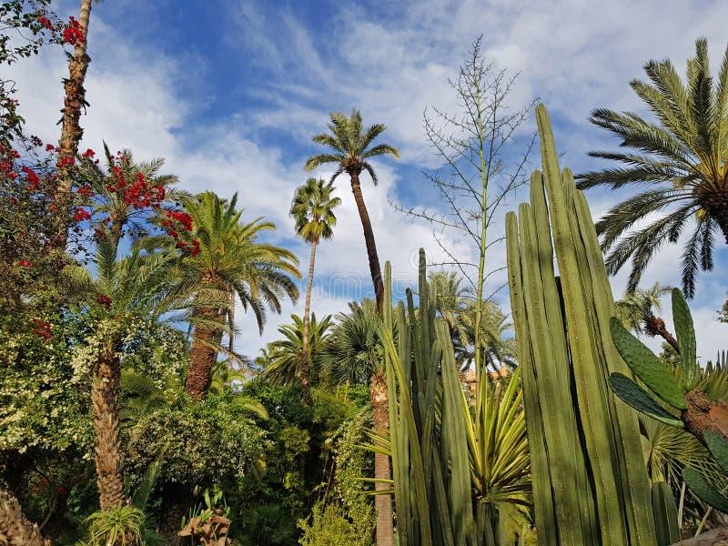 Πολύβλαστη βλάστηση στον κήπο Majorelle - Μαρόκο στοκ εικόνες
