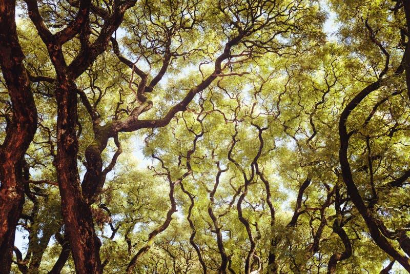 Πολύβλαστοι πράσινοι κλάδοι δέντρων Ο θερμός ήλιος άνοιξη λάμπει μέσω των δέντρων Παχιά πράσινα φύλλα, υπαίθριο τοπίο στοκ εικόνα με δικαίωμα ελεύθερης χρήσης