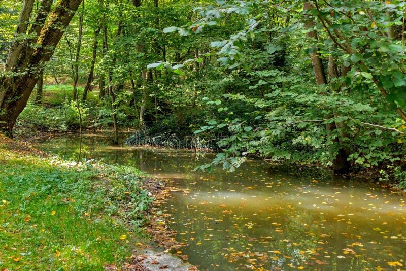 Πολύβλαστο πράσινο έλος, οικολογία, πράσινο έλος στο δασικό, φυσικό τοπίο στοκ εικόνα με δικαίωμα ελεύθερης χρήσης
