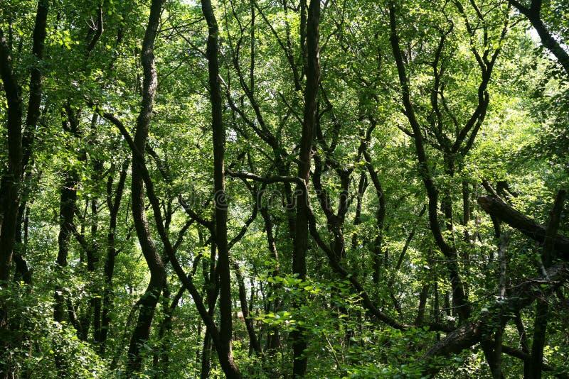 Πολύβλαστο πράσινο έλος Ο ήλιος οξύνει μέσω του παχιού φυλλώματος για να αποκαλύψει ένα πανέμορφο φυσικό τοπίο στοκ εικόνες