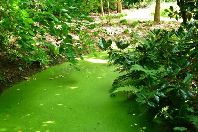 Πολύβλαστο πράσινο φυσικό τοπίο ελών στοκ εικόνες με δικαίωμα ελεύθερης χρήσης
