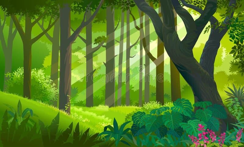 Πολύβλαστο πυκνό πράσινο δάσος με τις ακτίνες ήλιων σχετικά με τις εγκαταστάσεις και τα δέντρα διανυσματική απεικόνιση